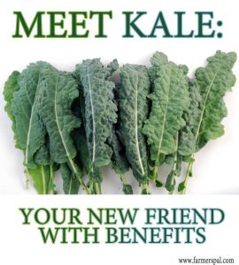 Kale Food Source